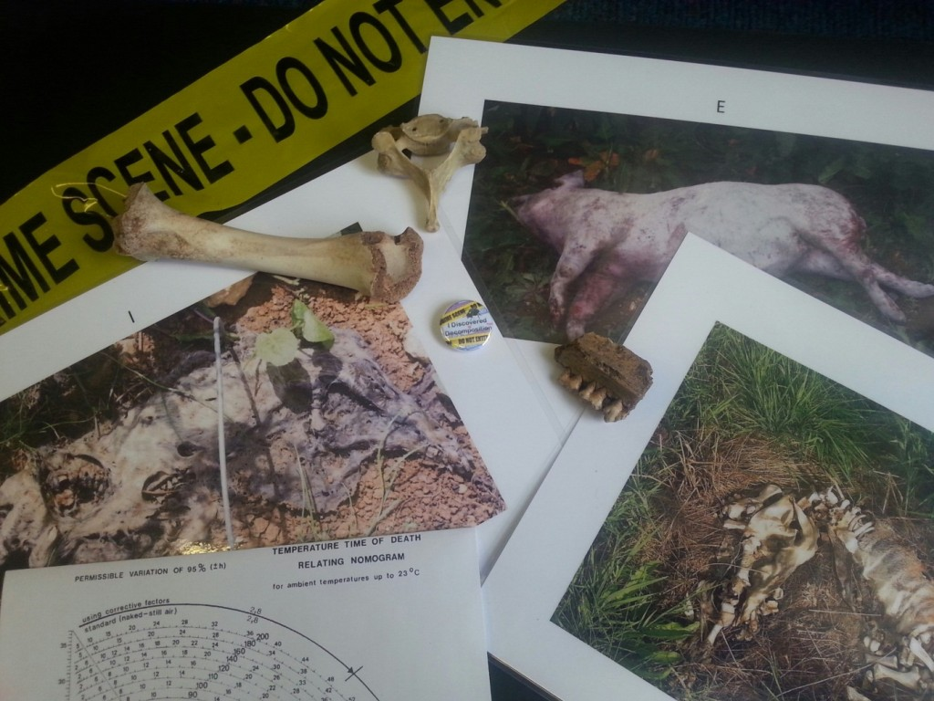 Resources for a 'Discover Decomposition' workshop